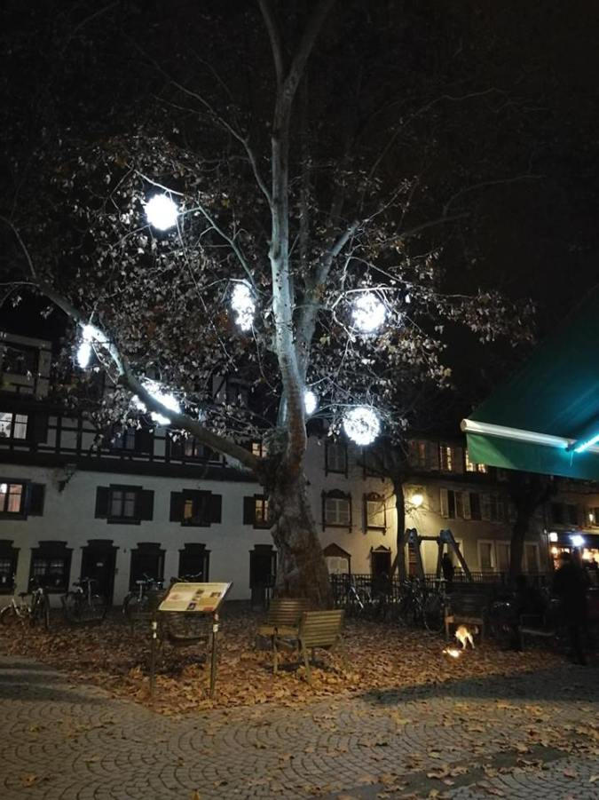albero strasburgo 1