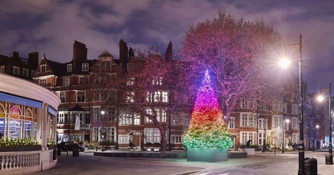 christmas-tree-2018-connaught 3