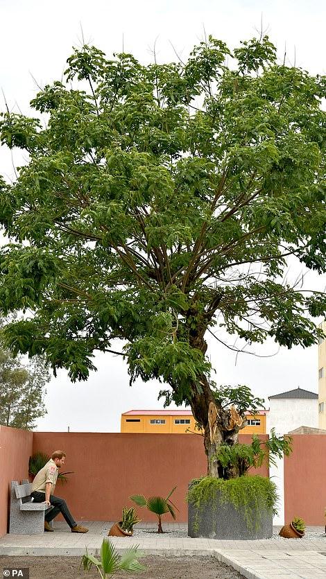 harry diana tree