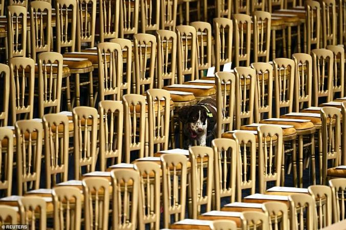 opening of parliament 2019 dog
